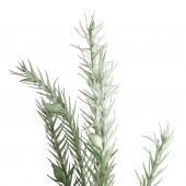 Branchage Romarino Vert 135cm