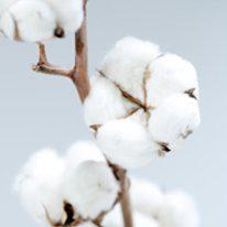 Carrés Fondants de Parfum Fleur de Coton Durance